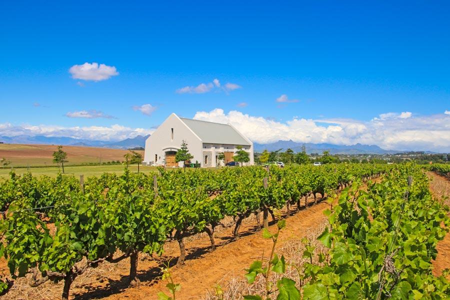 Tasting room in the vineyards at Nitida