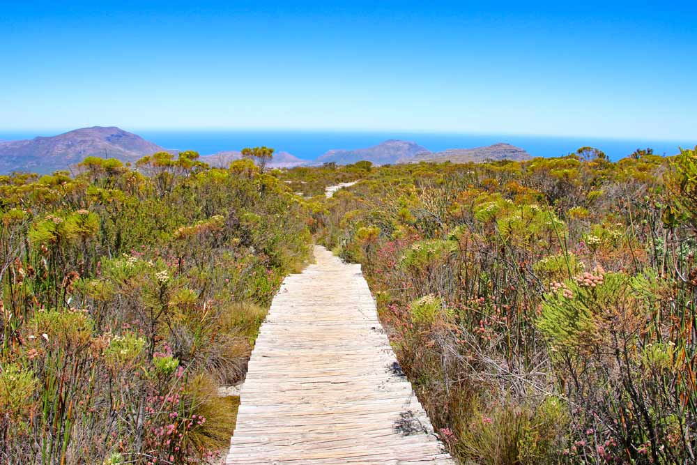 A wooden path on the top of Table Mountain