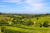 Constantia-Wine-Farm-view-from-Beau-Constantia