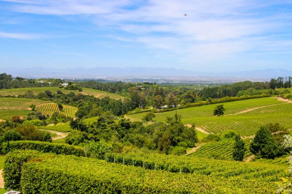 Constantia-Wine-Farm-view-from-Beau-Constantia