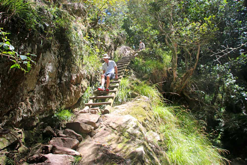 Campbell climbing down the ladder on the hike in Kirstenbosch Botanical Garden