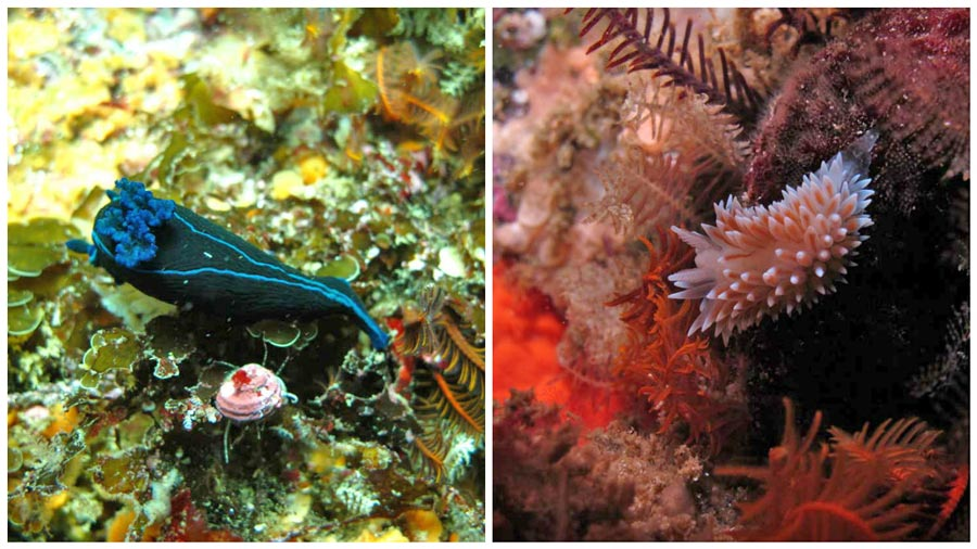 nudibranch dive simons town