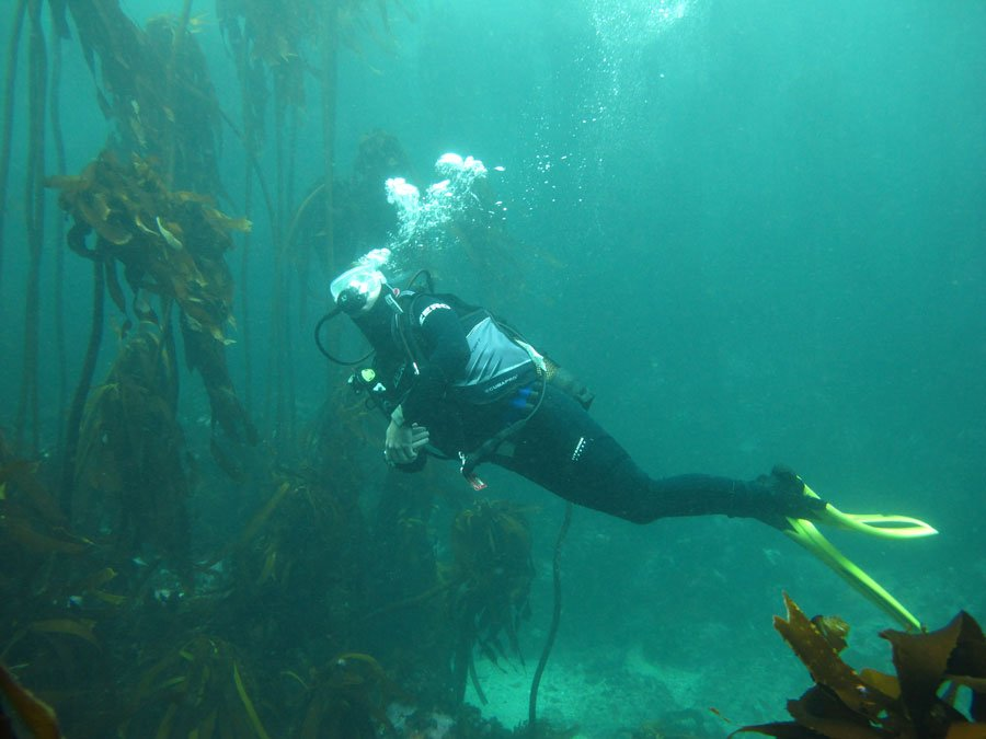 Diving in the Kelp Forest near Cape Town.