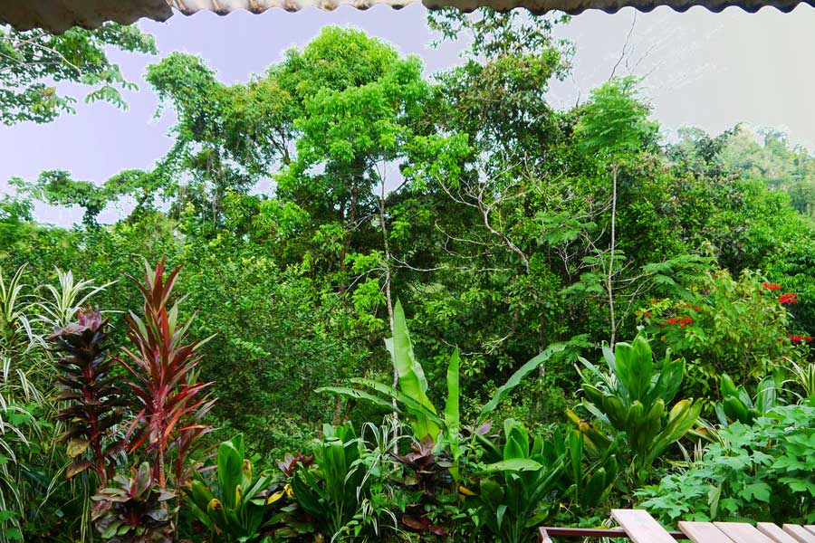The view from our bed sleeping in Bolita Eco Hostel in Costa Rica.