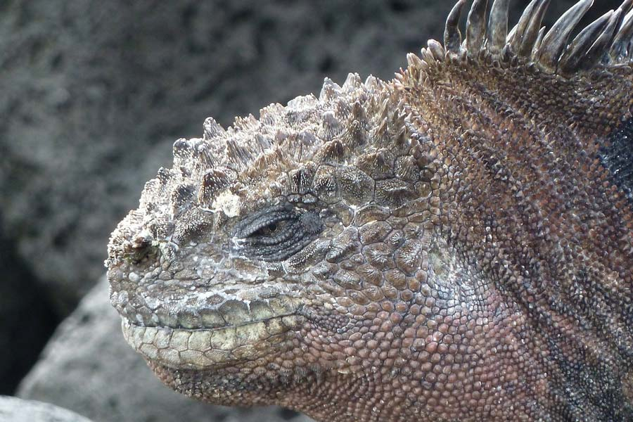 Galapagos islands amazing things to do in South America