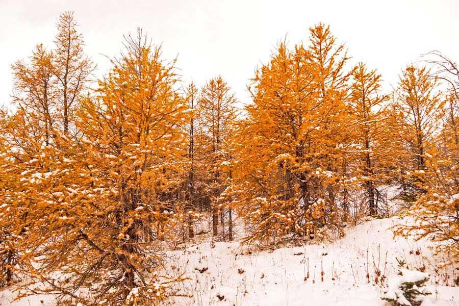 Larch Valley hike near Banff